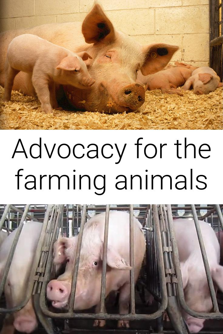 Advocacy for the farming animals