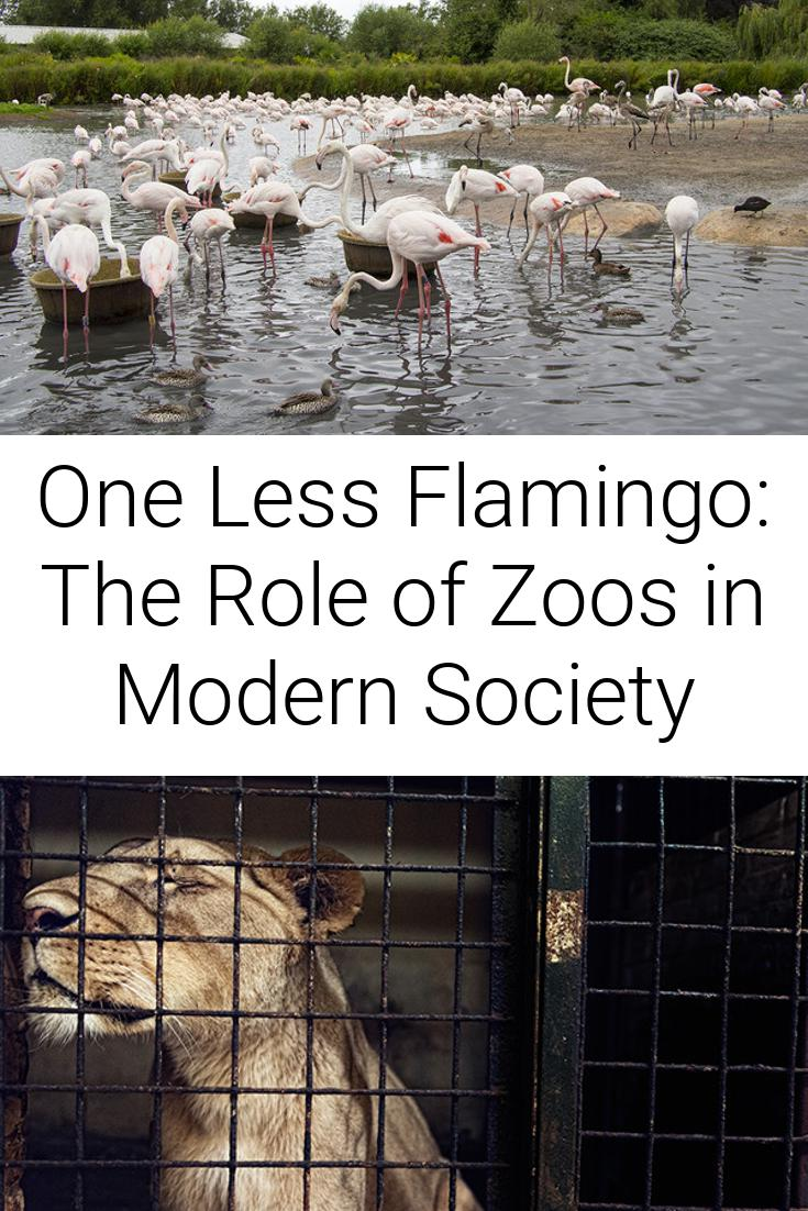 One Less Flamingo: The Role of Zoos in Modern Society