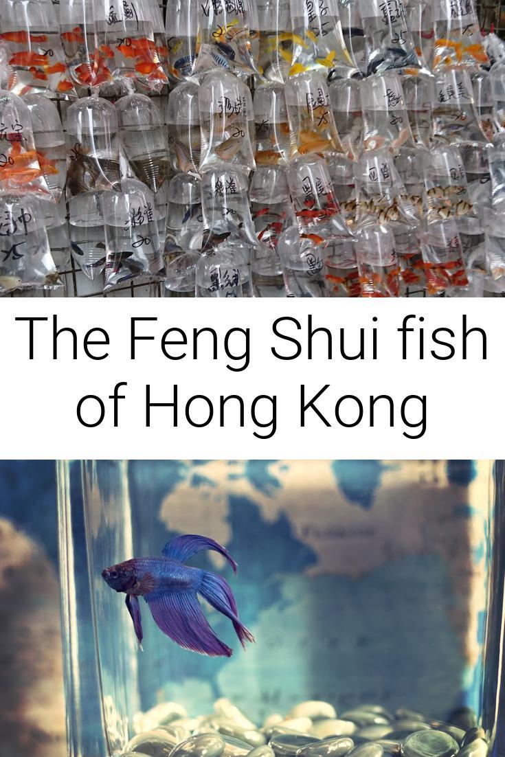 The Feng Shui fish of Hong Kong