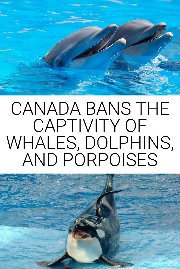 CANADA BANS THE CAPTIVITY OF WHALES, DOLPHINS, AND PORPOISES