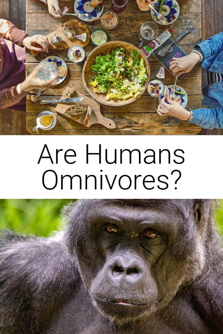 Are Humans Omnivores?