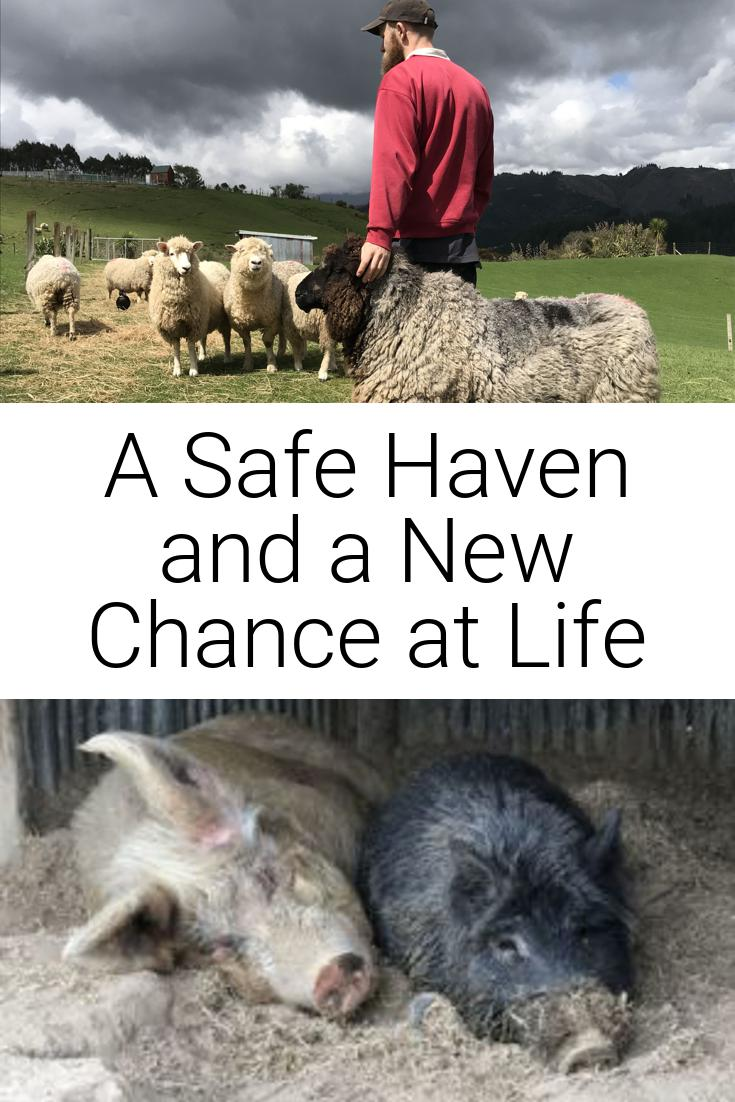 A Safe Haven and a New Chance at Life