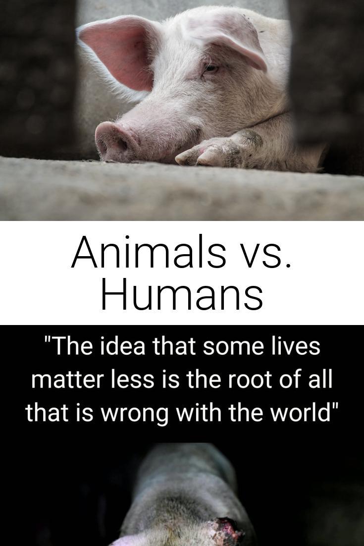Animals vs. Humans