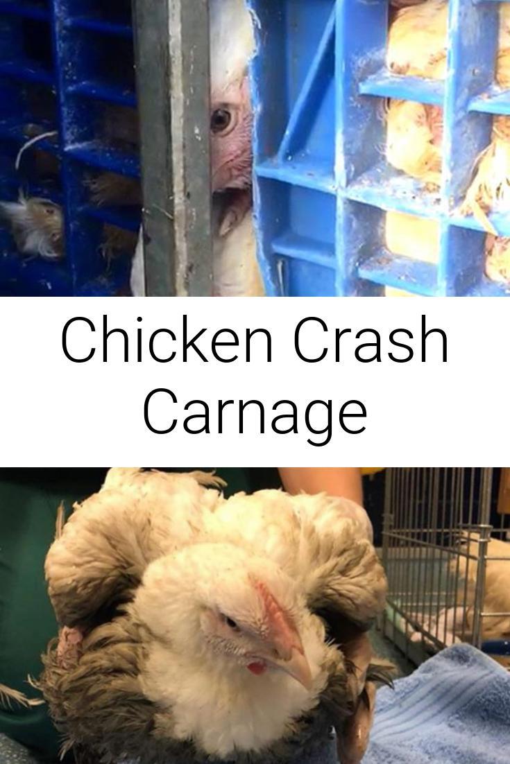 Chicken Crash Carnage