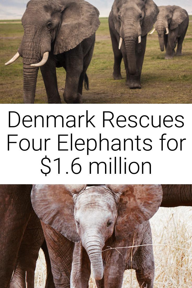 Denmark Rescues Four Elephants for $1.6 million