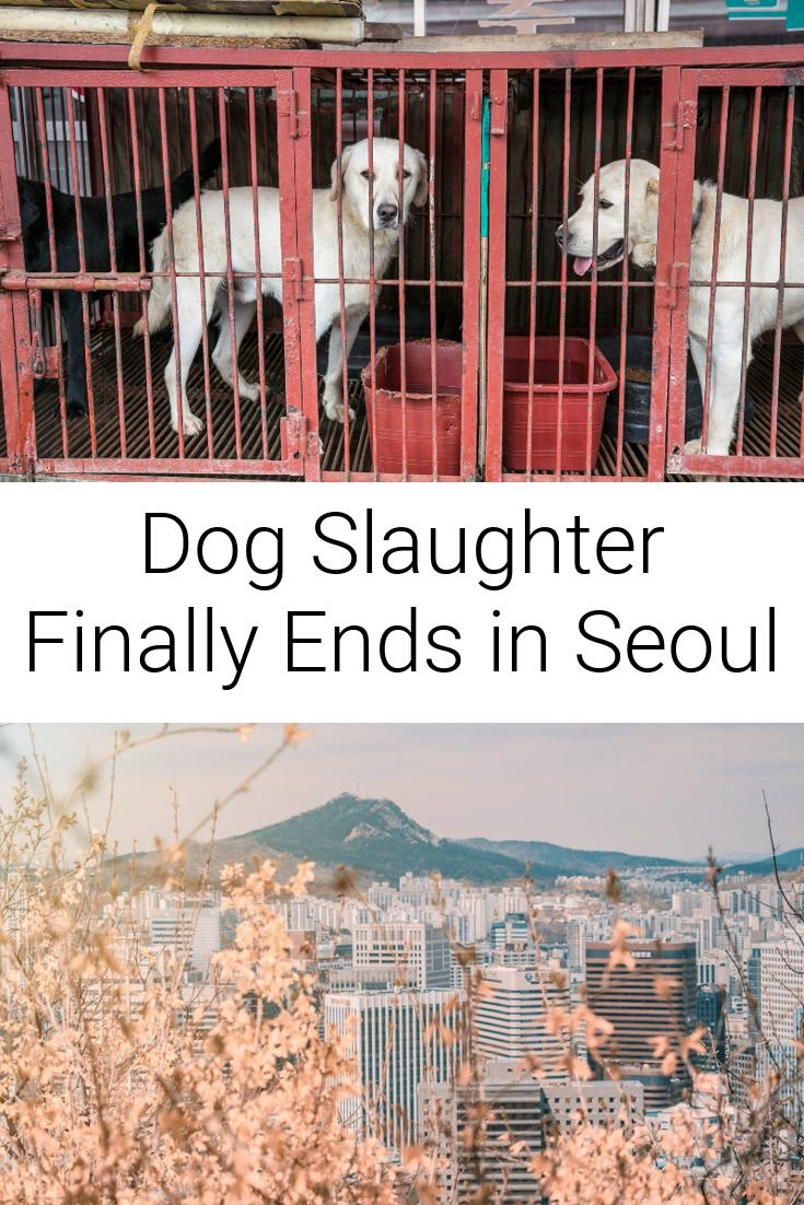 Dog Slaughter Finally Ends in Seoul