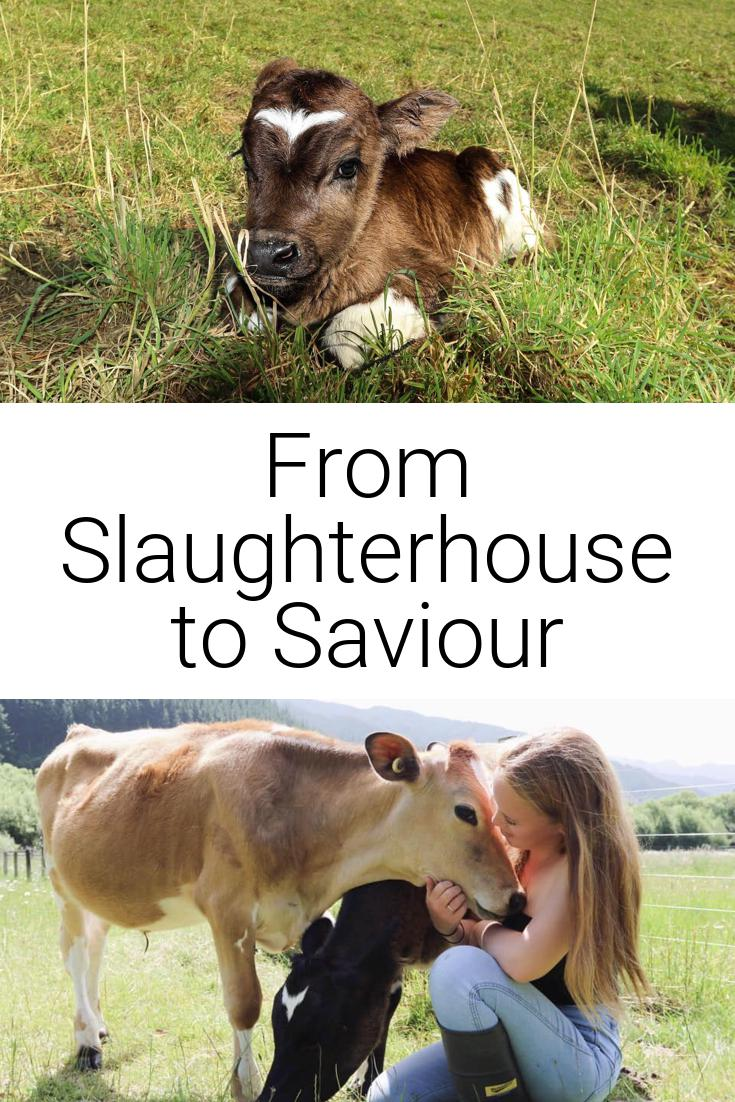 From Slaughterhouse to Saviour