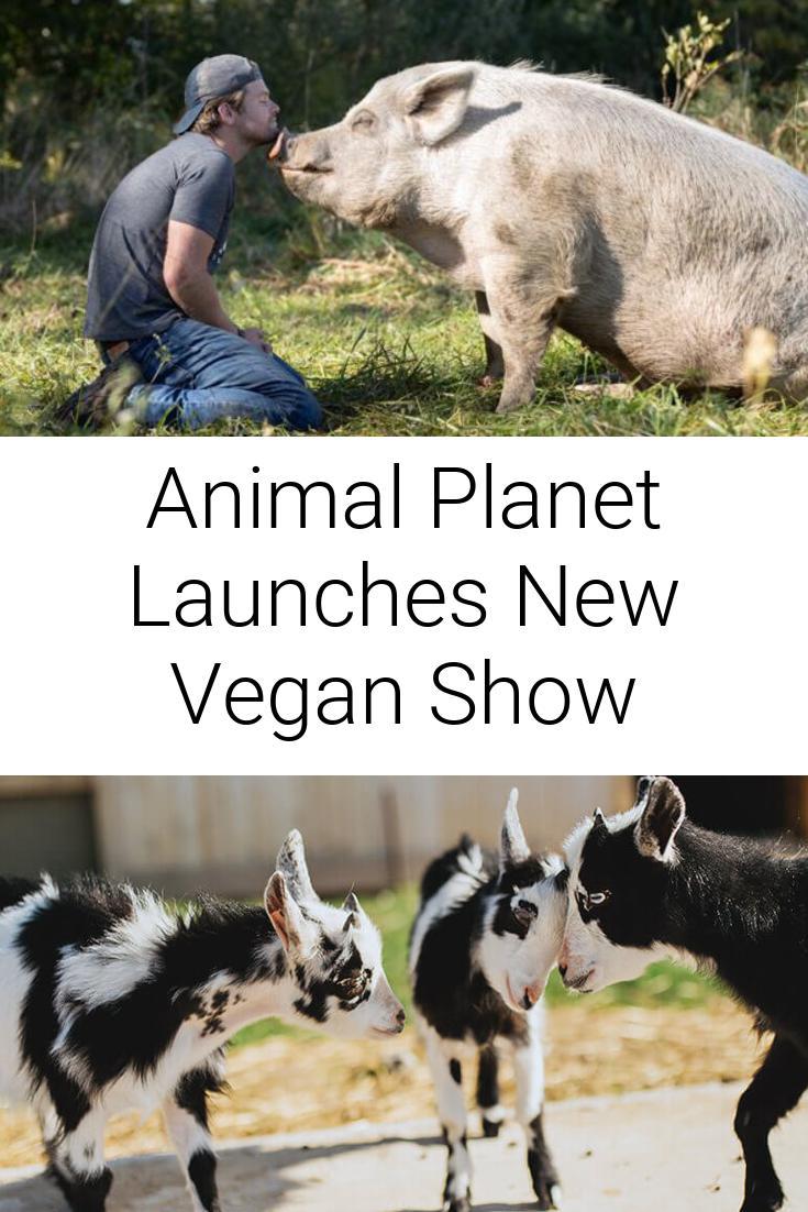 Animal Planet Launches New Vegan Show