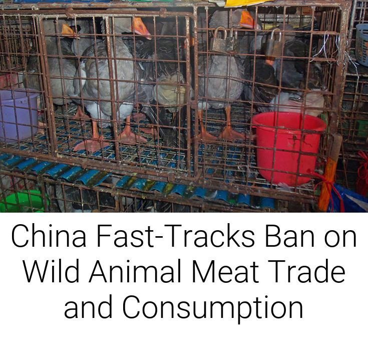 China Fast-Tracks Ban on Wild Animal Meat Trade and Consumption