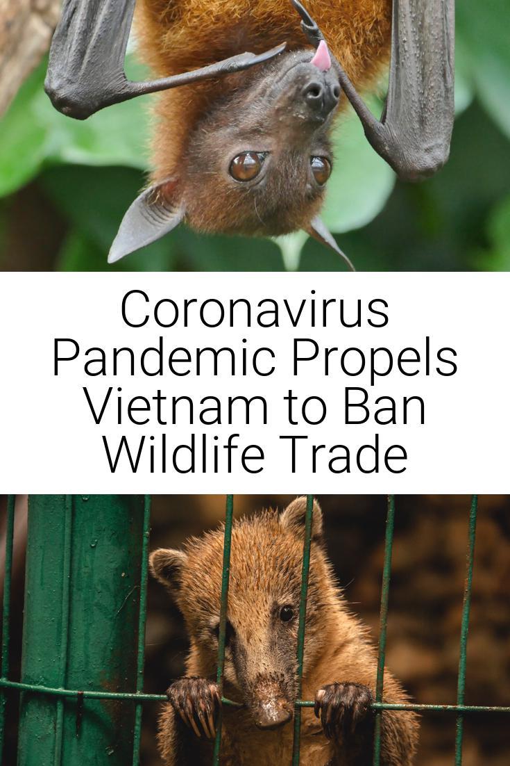 Coronavirus Pandemic Propels Vietnam to Ban Wildlife Trade
