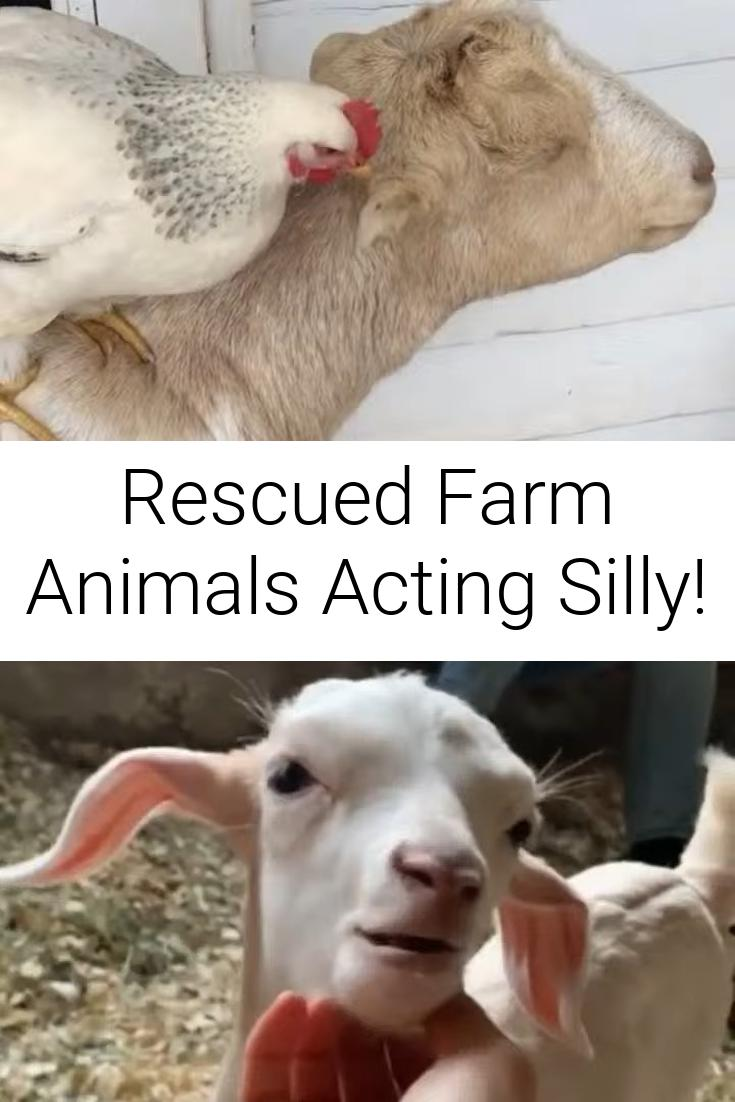Rescued Farm Animals Acting Silly!