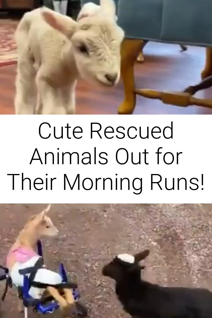 Cute Rescued Animals Out for Their Morning Runs!