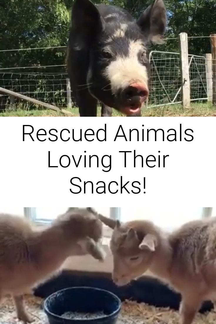 Rescued Animals Loving Their Snacks!
