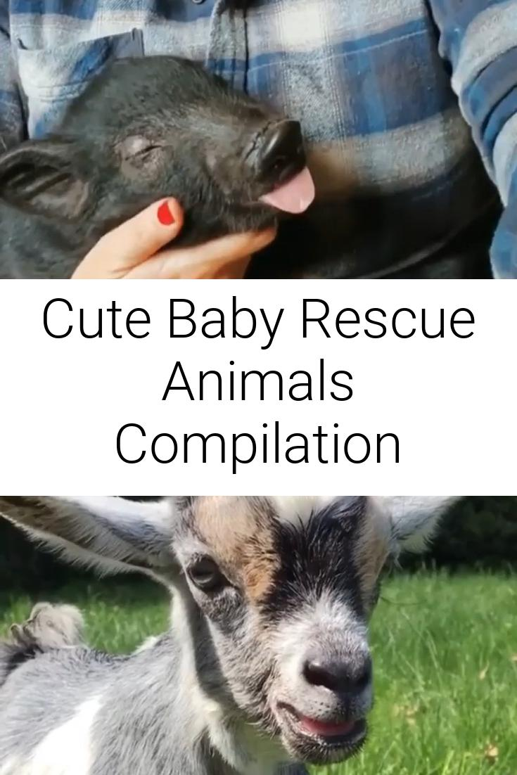 Cute Baby Rescue Animals Compilation
