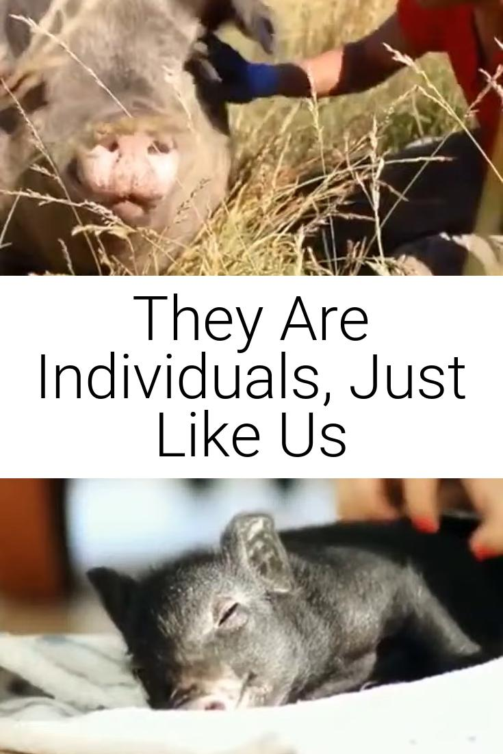 They Are Individuals, Just Like Us
