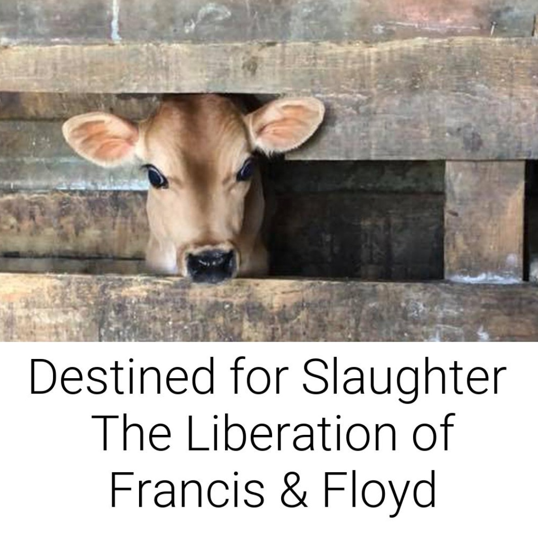 Destined for Slaughter | The Liberation of Francis & Floyd