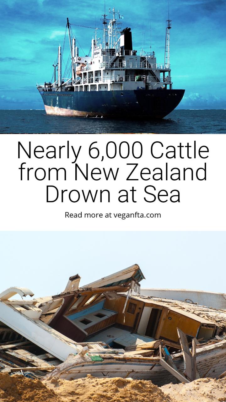 Six Thousand Souls Lost at Sea.