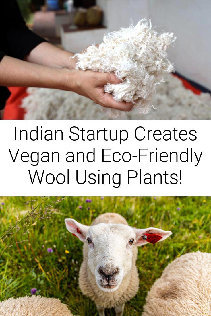 Indian Startup Creates Vegan and Eco-Friendly Wool Using Plants!