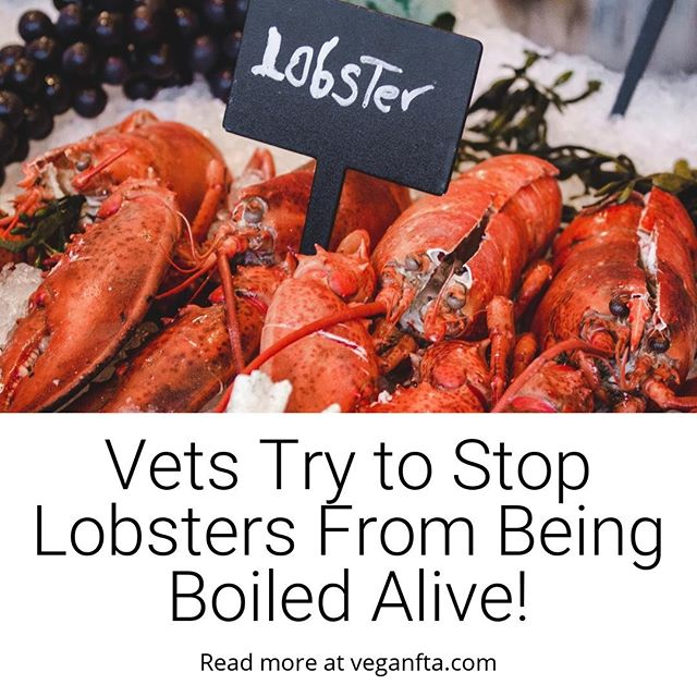 Vets Try to Stop Lobsters From Being Boiled Alive