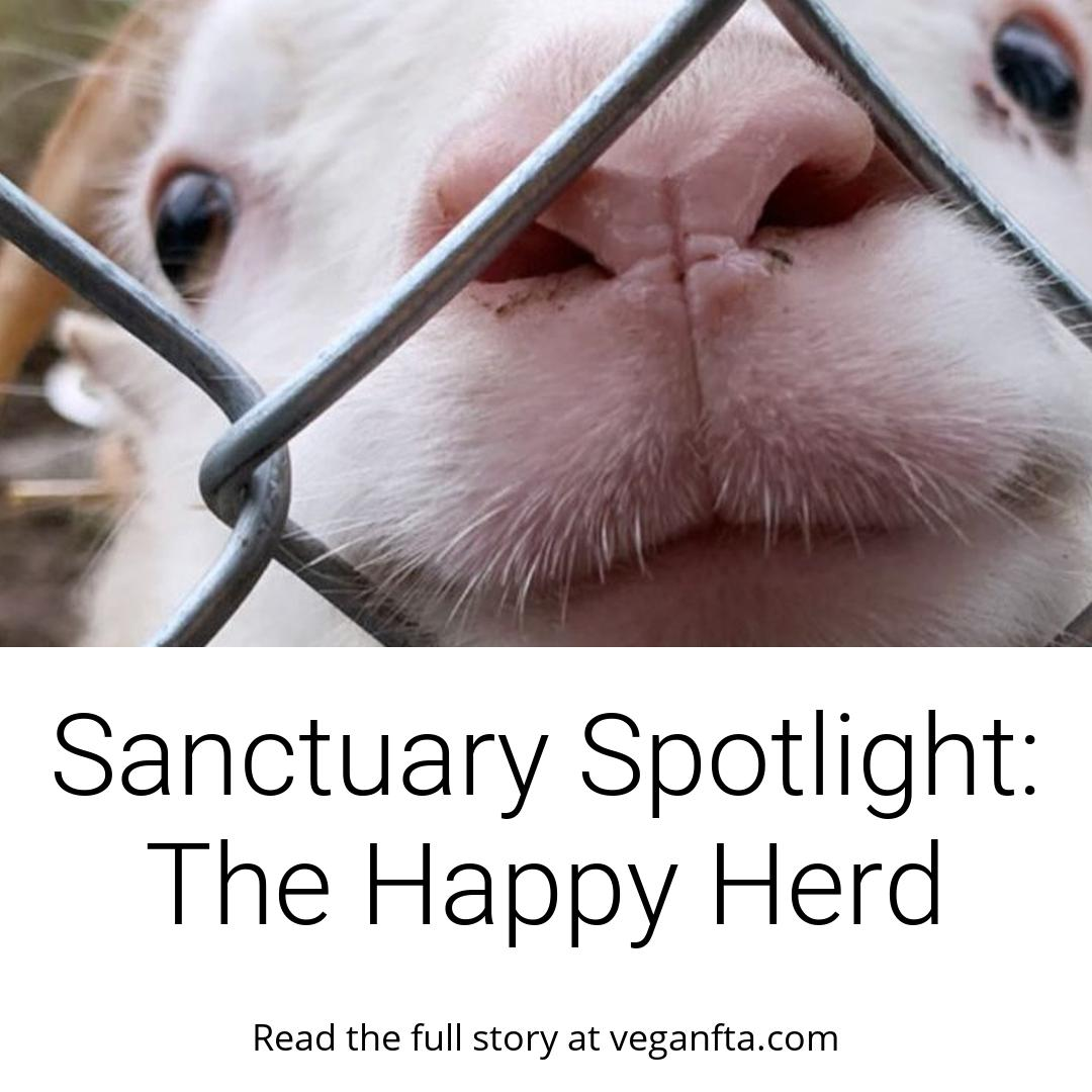 Sanctuary Spotlight: The Happy Herd