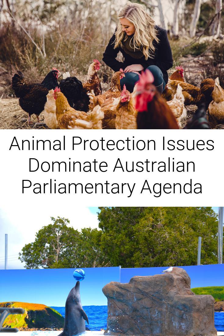 Animal Protection Issues Dominate Australian Parliamentary Agenda