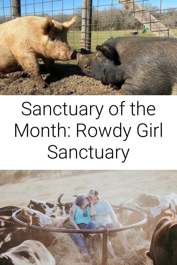 Sanctuary of the Month: Rowdy Girl Sanctuary