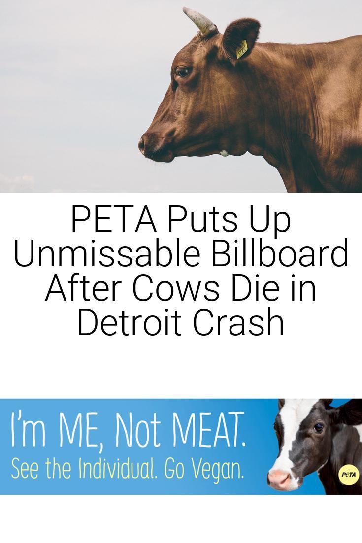 PETA Puts Up Unmissable Billboard After Cows Die in Detroit Crash