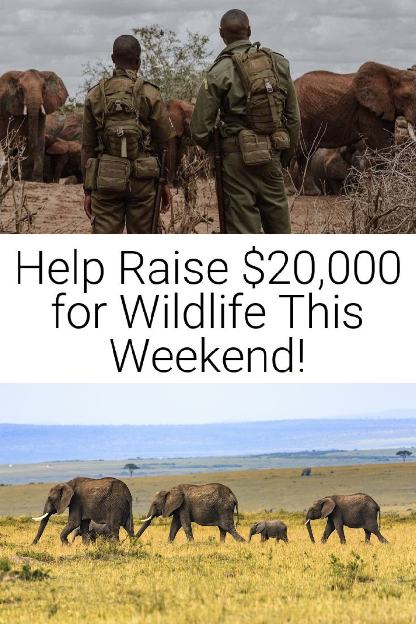 Help Raise $20,000 for Wildlife This Weekend!