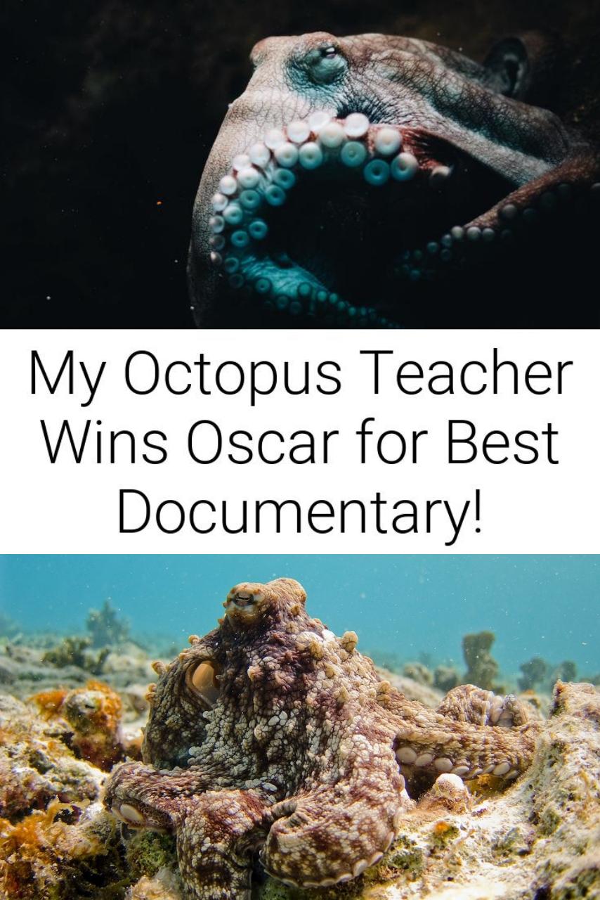 My Octopus Teacher Wins Oscar for Best Documentary!