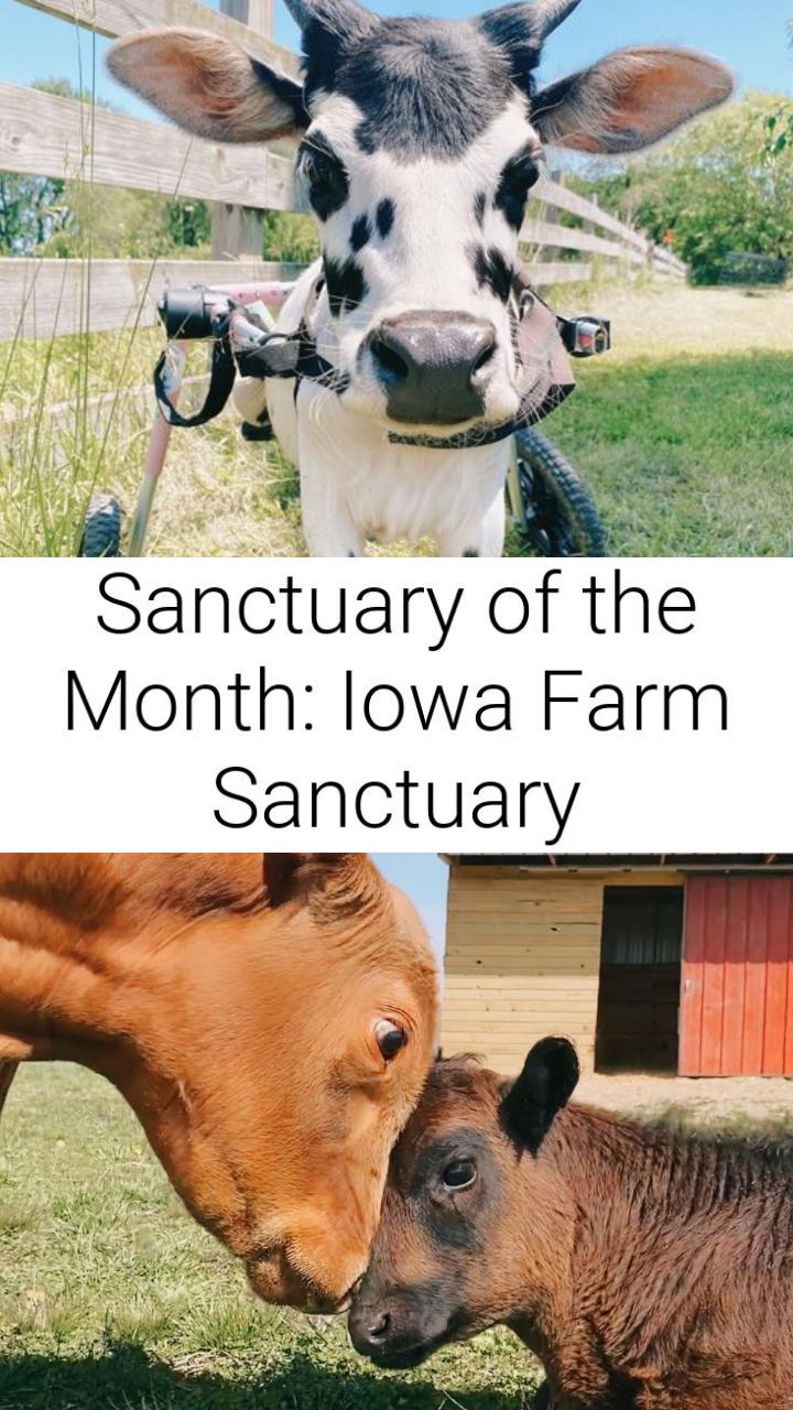 Sanctuary of the Month: Iowa Farm Sanctuary