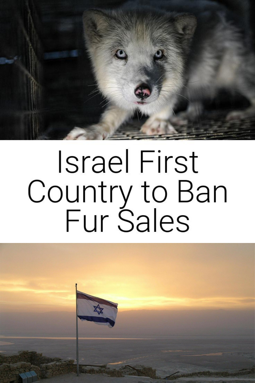 Israel First Country to Ban Fur Sales