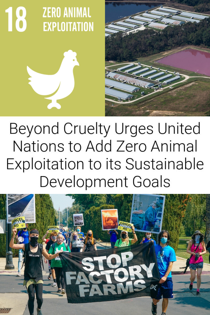 Beyond Cruelty Urges UN to Include Ending Animal Exploitation to its Sustainable Development Goals