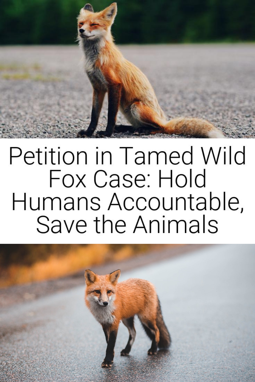 Petition in Tamed Wild Fox Case: Hold Humans Accountable, Save the Animals