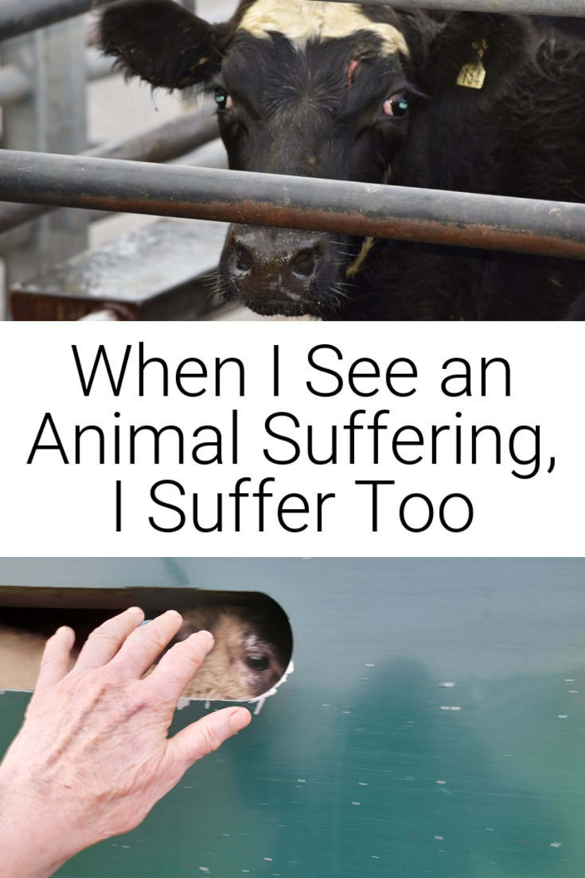 When I See an Animal Suffering, I Suffer Too