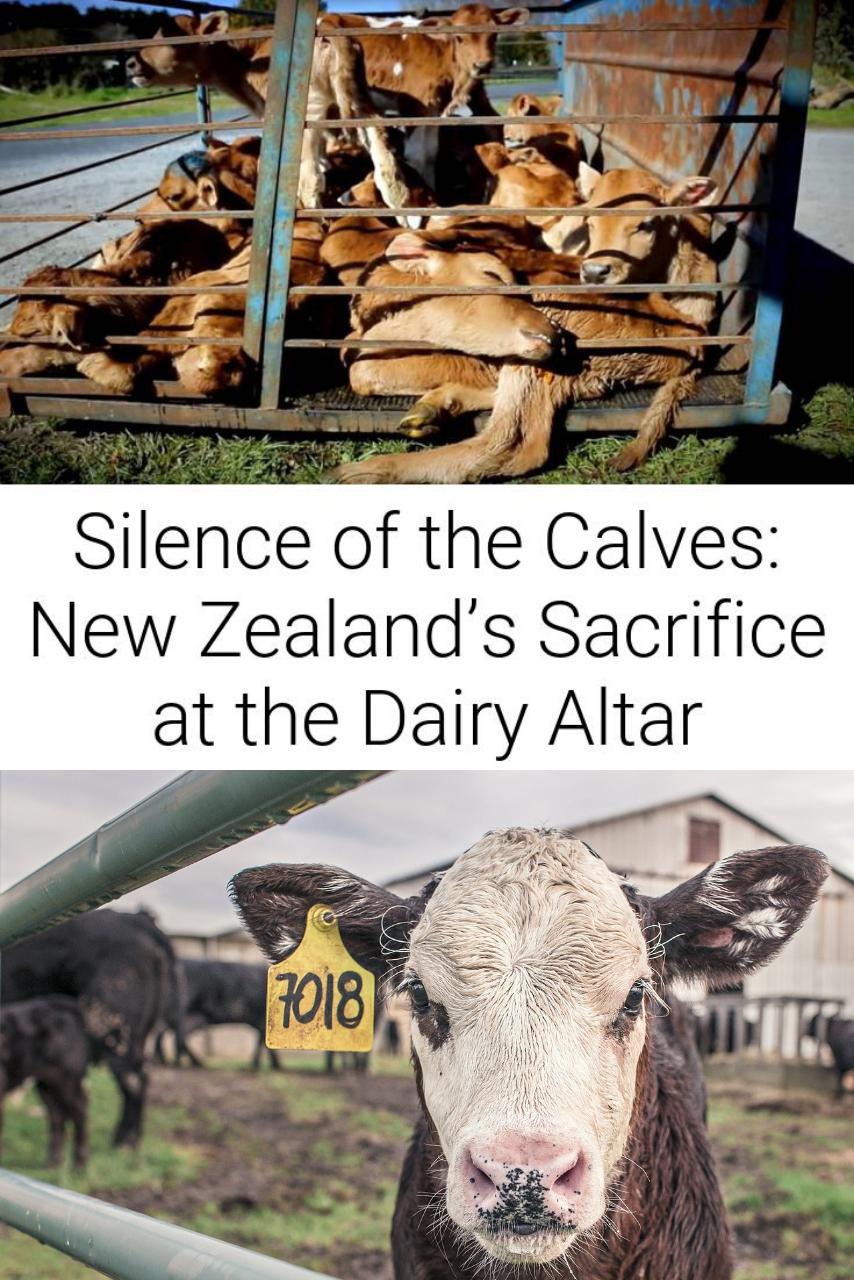 Silence of the Calves: New Zealand's Sacrifice at the Dairy Altar