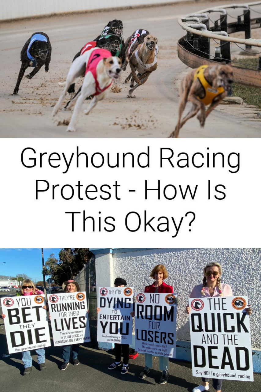 Greyhound Racing Protest - How Is This Okay?