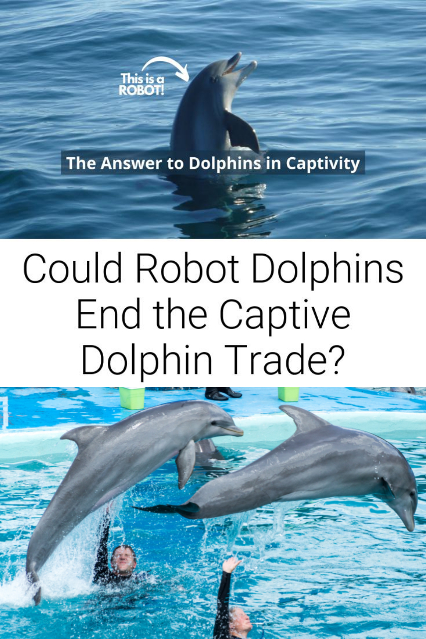Could Robot Dolphins End the Captive Dolphin Trade?