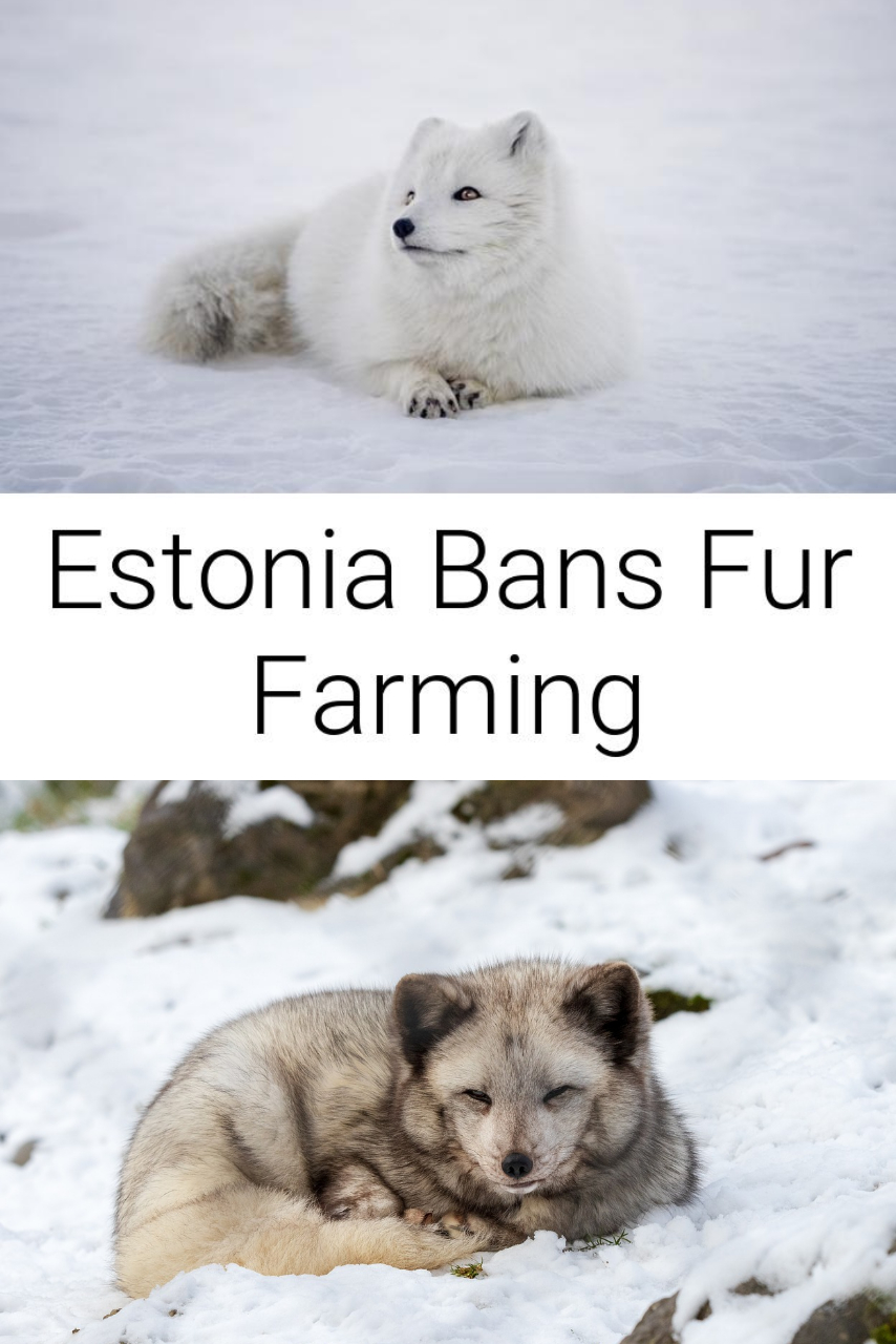 Estonia Bans Fur Farming