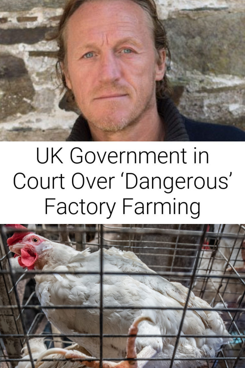 UK Government in Court Over 'Dangerous' Factory Farming