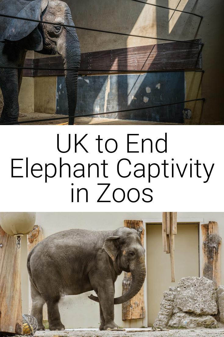 UK to End Elephant Captivity in Zoos