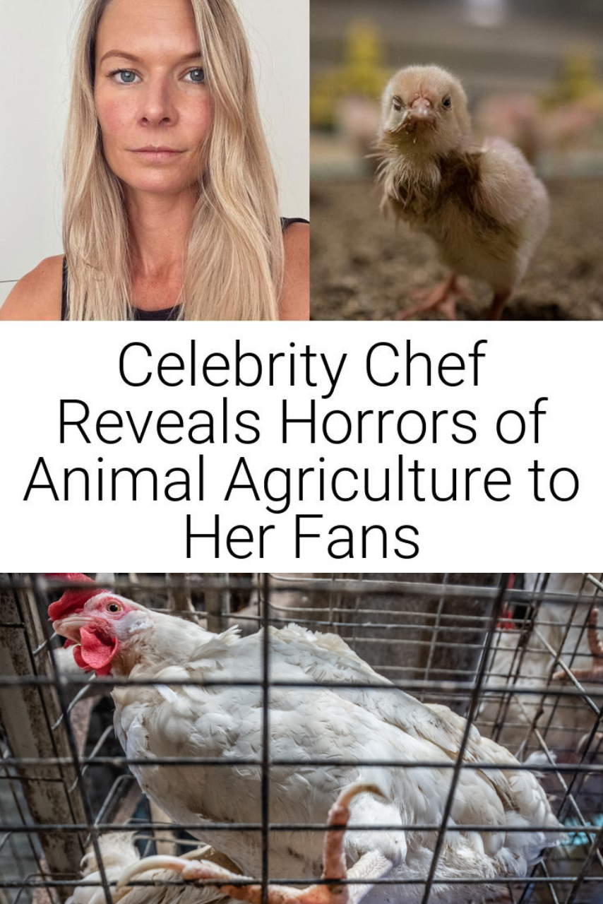 Celebrity Chef Reveals Horrors of Animal Agriculture to Her Fans