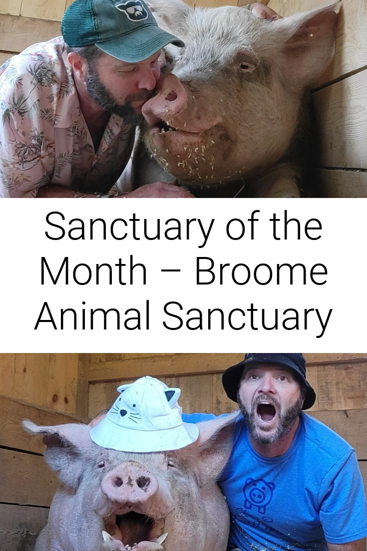 Sanctuary of the Month – Broome Animal Sanctuary
