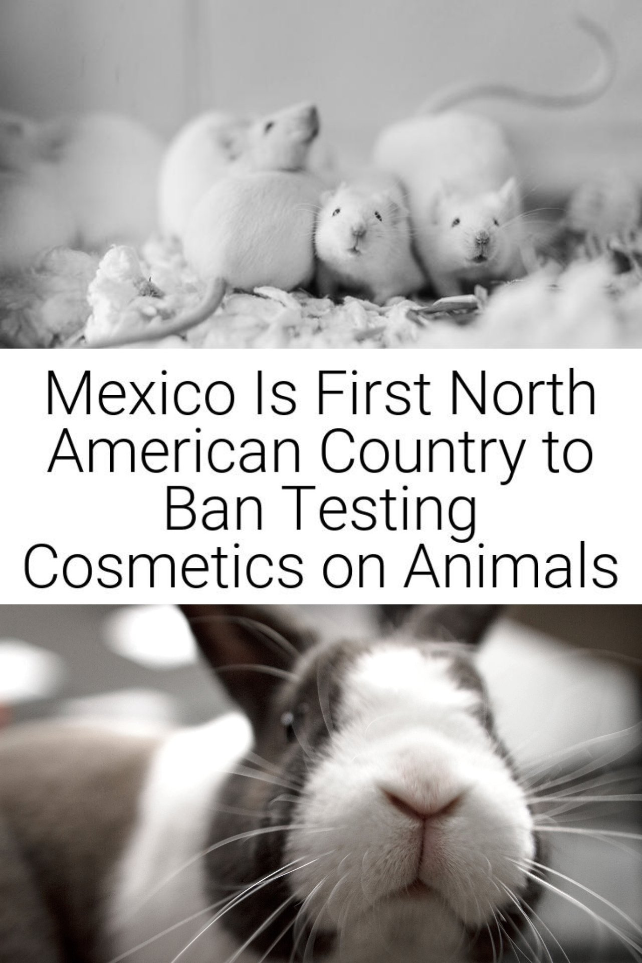 Mexico Is First North American Country to Ban Testing Cosmetics on Animals